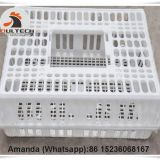 Sri Lanka Hot Sale Cheap Price Chicken Transport Coop & Plastic Transport Cage for Live Chicken for Wholesale & Plastic Carriage Cage