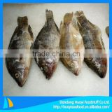 frozen fish best quality Chinese tilapia