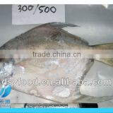 Frozen fresh pomfret fish in white color