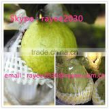 Fruits and vegetable Foam Protection Sleeve Net, foam net for pakcing vegetables and bottles , net espuma