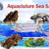 Pet food products aquaculture sea salt for vannamei shrimp