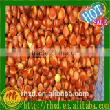 2015 new products tianjin roasted chestnuts/New crop chestnut price/Chestnut from China/raw cashew nuts