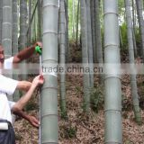 construction material bamboo