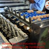 Automatic Egg Grading Equipment & Automatic Egg Packing Equipment