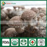 High quality Fresh Shiitake Mushroom Growing Spawn Log Kit Company for Garden Farm Greenhouse