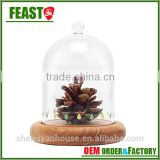 Bell jar with wooden base clear glass dome stand