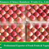 Chinese Fresh Red Fuji Apple