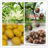 Organic Roasted Chinese Chestnuts