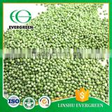 Chinese FD Frozen Yellow And Green Peas Pods