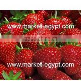 Strawberry from Market Egypt