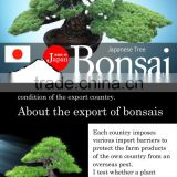 High-grade and a heart feels relaxed garden product japanese BONSAI for Freedom , big tree