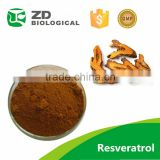 Antitussive resveratrol giant knotweed rhizome extract,Giant knotweed rhizome extract 98% Resveratrol