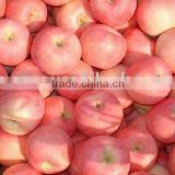 Fuji Apple Fruit From China