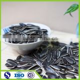 Edible long shape sun flower seeds for sale