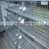 Huaxing factory design layer quail cages for sale