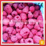Whole Red Frozen Iqf Raspberry From China