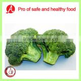 IQF Frozen Broccoli From China