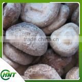 2015 Chinese New Crop high quality grade A low price China IQF FROZEN SHITAKE MUSHROOM WHOLE / QUARTER / SLICE