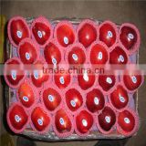 New crop Huaniu apple/red delicious apple for supplier
