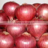 Onion seeds in india`
