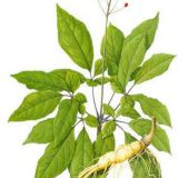 Ginseng extract,PLANT EXTRACT,Solvent Extraction