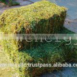 ALFALFA HAY IN BALES, SINGLE PRESS