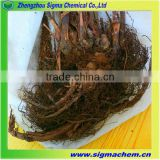 China High Quality Aconitum Sinomontanum Nakai