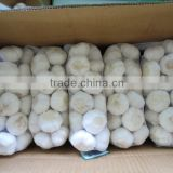 China factory price first grade pure white garlic fresh