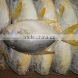 GRADE A Whole Round Frozen Golden/Black/silver Pomfret Fish