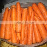 2014 chinese fresh baby carrot for sale