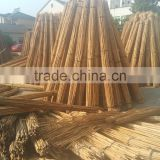 Tonkin dry green garden plant bamboo canes and bamboo stakes and bamboo poles
