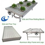greenhouse seed bed rolling benchs mesh wire Flood plastic trays