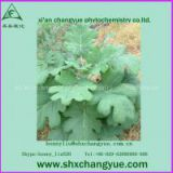 factory price 100% natural macleaya cordata extract
