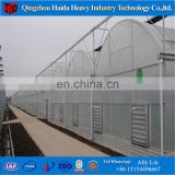 Multi-span plastic film greenhouse for orchid phalaenopsis seedling
