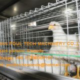 Hot Sale Cyprus Poultry Farm A Type Battery Broiler Cage & Chicken Cage & Chicken Coop to Improve Chicken Meat Production