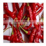 Indian Red Chilly