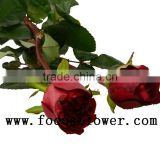 Beautiful rose flower scenery fresh cut lotus flowers black magic in big discount farms directly supply
