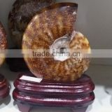 large natural polished conch jade pattern ammonite fossils for sale decoration