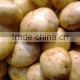 Fresh Potato From Bangladesh