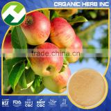 Apple Powder Bulk Natural Green Apple Extract