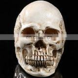 Artificial resin crafts skull heads wholesale home and holiday decoration