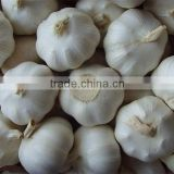 2015 Cheap Wholesale Prices!! Own Factory Production shandong fresh normal white & pure white garlic price