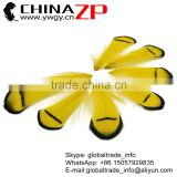 No.1 Supplier CHINAZP Selected Prime Quality Natural Dyed Yellow Lady Amherst Pheasant Tippest Feathers for Sale