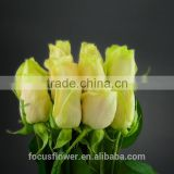 Fresh cut Yellow Rose Vendelas wedding bouquet wholesale romantic Yellow Rose Vendela with attractive flowers for bride
