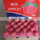 Red fresh apple fruit exporter/bulk sweet red apple exporter