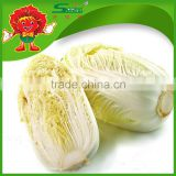 chinese brands cabbage fresh green cabbage