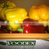 BELL PEPPER/ FRESH CAPSICUM; RED ; GREEN, YELLOW COLOR