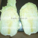 Fresh Green long Cabbage FRAMLAND