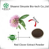 Free Sample Natural Nutritional Red Clove Extract Powder