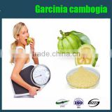 Factory supply free sample garcinia cambogia extract manufacturers,50% 60% HCA powder, garcinia cambogia suppliers
